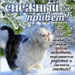 Красивые и нежные картинки снежный привет