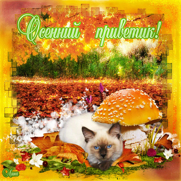 Осень кот или кошка
