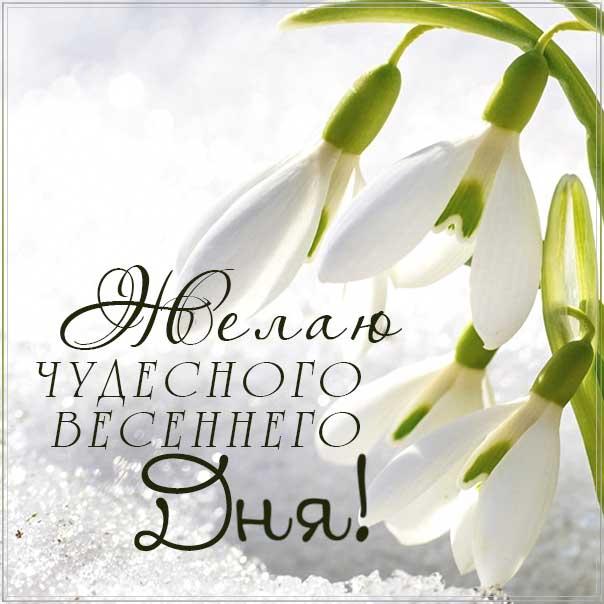 чудесного весеннего дня, весенний день, картинка доброго дня, подснежники весна, картинка с надписью добрый день, отличного настроения, позитивного дня
