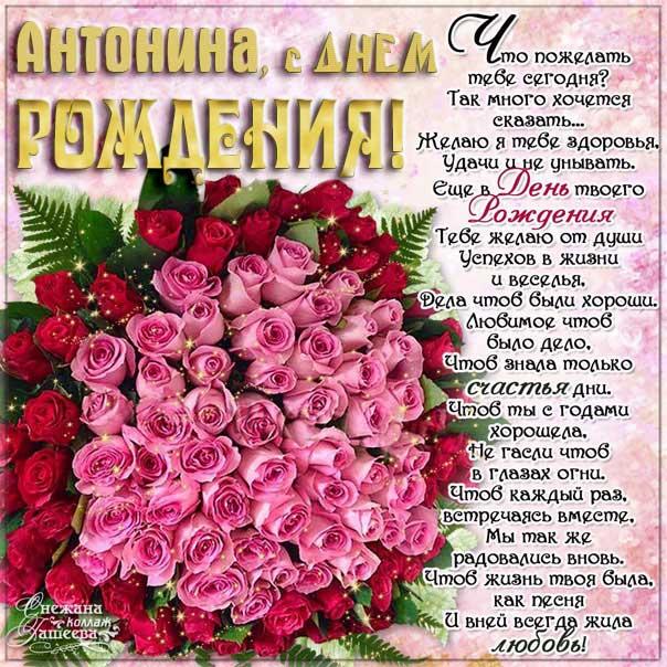 Картинки с Днем рождения Антонина, розы, цветы, красивая надпись, Антонине открытка с днем рождения