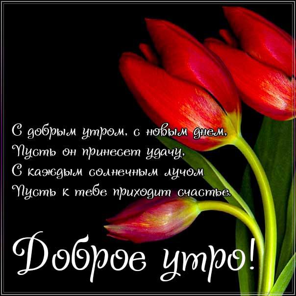 доброе утро, с добрым утром, утренняя улыбка, чудесного настроения, про утро картинка, утро с тюльпанами